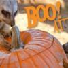 """Murciélagos, Osos y Bongos en el Zoológico del Condado de Milwaukee durante """"Boo at the Zoo"""""""