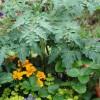Grow a Nutritious Garden in a Pot