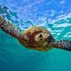 Revuelve y Prueba… Té con las Tortugas en Nature Museum