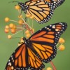 El Valor Announces Innovative Monarch Butterfly Event