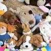 Lake Shore Hogs Anuncia su Evento de Animales de Peluche Drive & Ride for Kids