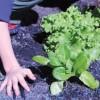 Nuevos Jardines Ecológicos en Escuelas de Chicago