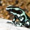 Nueva Exhibición de Anfibios en el Shedd Aquarium