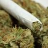 Ahora es más Fácil la Investigación de la Mariguana Medicinal en E.U.