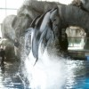 Shedd Aquarium Offers Free Admission to Seniors in September