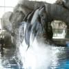 Shedd Aquarium Offers Free Admission to Seniors in September
