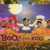 Brookfield Zoo's Annual Boo! at the Zoo Offers Halloween Fun for Families