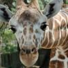 Brookfield Zoo's ZAP! Is Back in Your Neighborhood