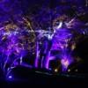 ComEd Comparte la Luz Apoyando los Eventos de Iluminación Navideña Comunitaria