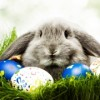 FREE Kids Club Event: Easter Celebration