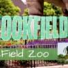 La Sociedad Zoológica de Chicago Celebra el Mes de la Herencia Hispana