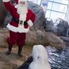 Maravilla Invernal en el Shedd Aquarium
