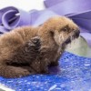 Shedd Aquarium Asks Public to Join Mission to Help Animals in Need