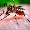 Hace Falta Más Trabajo para Combatir el Zika