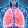 Los Pulmones no son Solo Para Respirar, Sugiere Nuevo Estudio