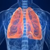 Lungs Aren't Just for Breathing, a New Study Suggests