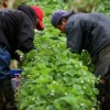 La Sen. Feinstein, El Rep. Gutiérrez y Abogados del Movimiento Laboral Revisan Esfuerzos para Proteger a los Granjeros Inmigrantes y Discutir Sus Contribuciones