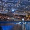 Eventos de la Temporada Navideña en el Shedd Aquarium