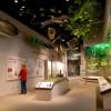 Héroes Desconocidos – Nueva Exhibición en el Museo Illinois State en Springfield