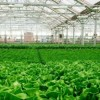 City Breaks Ground on Second Gotham Greens Greenhouse