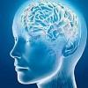Cómo Decide el Cerebro Esforzarse