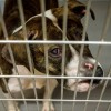 Chicago Animal Care and Control Announces New Program to Return Lost Animals