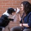 Chicago Animal Care and Control Anuncian Nuevo Programa para Regresar Animales Perdidos