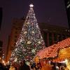 La Ciudad de Chicago Busca el Arbol de Navidad Perfecto