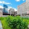 La Ciudad Anuncia un Aumento en Financiación para los Esfuerzos de Embellecimiento