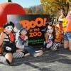 Brookfield Zoo's Annual Boo! at the Zoo Extends Halloween Fun