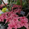 Holiday Flower Show to Showcase at Garfield, Lincoln Park Conservatories