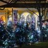 La Ultima Noche de Holiday Magic con la Celebración de la Víspera del Año en el Zoológico de Brookfield Zoo