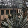 Garfield Park Conservatory Agave Plant Flourishes Around-the-clock