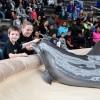 Brookfield Zoo Aumementa la Concientización Sobre el Autismo