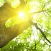 Dos Horas por Semana de Naturaleza son Dosis Clave para Salud y Bienestar