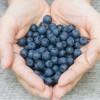Estudio Descubre que la Dieta Rica en Flavonoides Protege Contra el Cáncer y las Enfermedades del Corazón