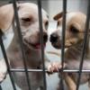 El Condado de Cook Anuncia Programa de Subsidios de $ 8 Millones Para Aumentar el Espacio de Refugio para Animales