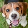 La Exposición a los Perros a Edad Temprana Puede Reducir el Riesgo de Desarrollar Esquizofrenia