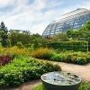 Ultima Oportunidad de Disfrutar el Jardín de Monet en el Conservatorio de Garfield Park
