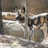 Programas de Verano en el Zoológico de Lincoln Park