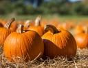 Free Pumpkin Patch Event